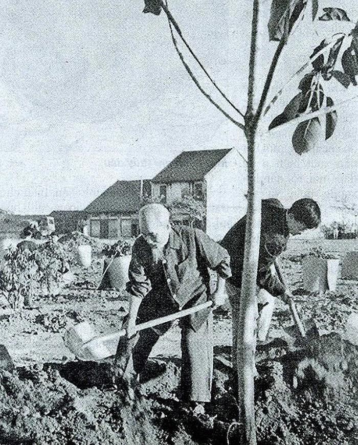 Bác Hồ trồng cây đa tại Công viên Thống Nhất mở đầu Tết trồng cây do Người phát động ngày 11/01/1960.