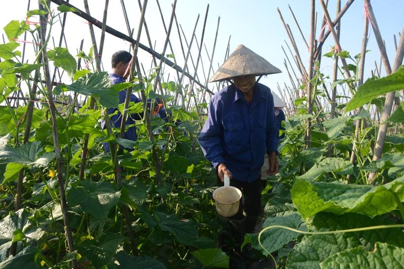HTX Nông nghiệp thị trấn Lâm Thao